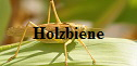 Holzbiene